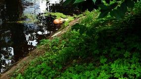 Topo muschiato Fotografia Stock Libera da Diritti