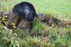 Topo velho da árvore imagens de stock