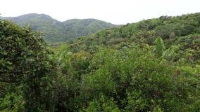 Topografia del Vallee de Mai Nature Reserve stock footage