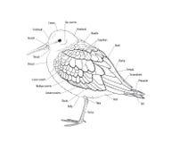 Topographie d'un oiseau illustration de vecteur