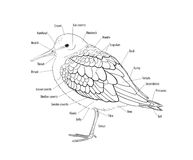 Topography of a bird Stock Images