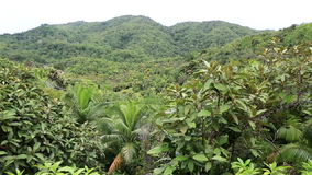 Topography of the Vallee de Mai Nature Reserve. Vallee de Mai Nature Reserve in Praslin. Seychelles stock video footage