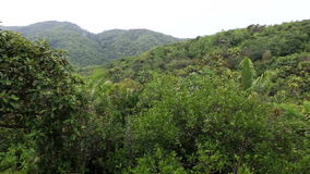 Topography of the Vallee de Mai Nature Reserve. Vallee de Mai Nature Reserve in Praslin. Seychelles stock footage