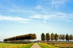 topole krajobrazowe Fotografia Stock
