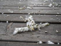 Topolowy fluff na drewnianych deskach Zdjęcia Royalty Free