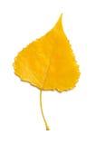 Topolowy liść Zdjęcia Stock