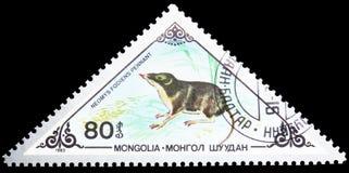 Toporagno di acqua euroasiatico (fodiens) del Neomys, vario serie dei mammiferi, circa 1983 immagini stock libere da diritti