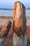 Topos Petrified da árvore no lago Fotografia de Stock Royalty Free