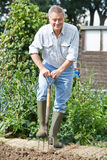 Toppa di verdure di scavatura dell'uomo senior su assegnazione Fotografia Stock Libera da Diritti