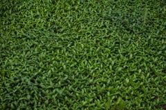Toppa frondosa verde del giardino fotografia stock libera da diritti