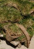 Toppe della zolla dell'erba verde Fotografia Stock