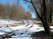 Toppe sciolte fra gli alberi fotografia stock libera da diritti