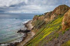 Toppen blom för pelikanliten vik fotografering för bildbyråer