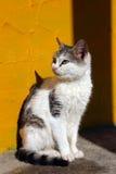 Toppen katt Arkivfoto