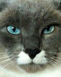Toppen katt arkivbilder