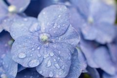 Toppen liten makro av en blå blomma royaltyfri fotografi
