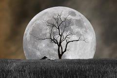 Toppen måne och kargt träd med kojan i nattallhelgonaaftonfestival Royaltyfria Bilder