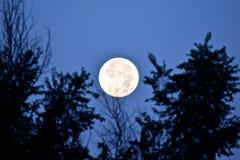 Toppen måne som ställer in 8-11-14 Arkivbilder