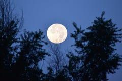 Toppen måne som ställer in 8-11-14 Royaltyfri Fotografi