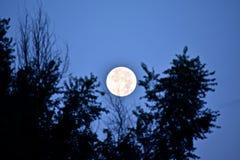 Toppen måne som ställer in 8-11-14 Arkivbild