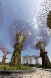 Toppen-träd Royaltyfria Foton
