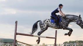 Toppen ultrarapid av en kvinnajockey hoppar över barriärerna på en häst stock video