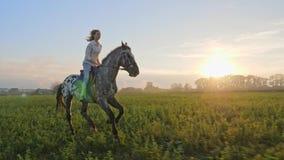 Toppen ultrarapid av unga flickan som rider på en häst på ängen under solnedgång arkivfilmer