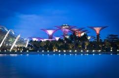 Toppet träd på Singapore med blå himmel Arkivfoto