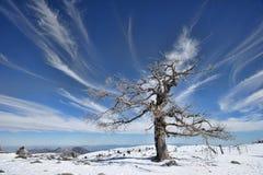 Toppig bergskedja de las Nieves i landskapet av MÃ-¡ lagaen Arkivfoto