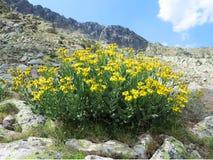 Toppig bergskedja nationalpark för de Guadarrama Royaltyfri Fotografi