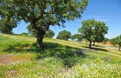 Toppiga bergskedjan de Aracena och Picos de naturliga Aroche parkerar, det Huelva landskapet, Spanien fotografering för bildbyråer