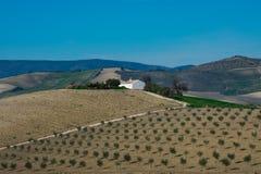Toppiga bergskedjan de naturliga Grazalema parkerar Parque den naturliga toppiga bergskedjan de Grazalema Arkivfoto
