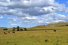 Toppiga bergskedjor y-nubes Arkivfoton