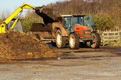 Topping up with manure. Agricultural scene of farmer loading his commercial muck spreader with manure before fertilising his field Royalty Free Stock Image