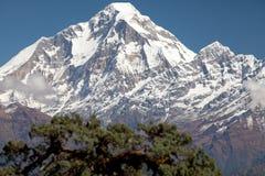 Toppmöte av Dhaulagiri Arkivfoton