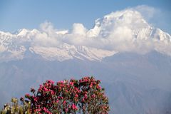 Toppmöte av Dhaulagiri, Annapurna strömkrets, Kaski område, Nepal Royaltyfri Foto