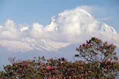 Toppmöte av Dhaulagiri, Annapurna strömkrets, Kaski område, Nepal Royaltyfri Bild