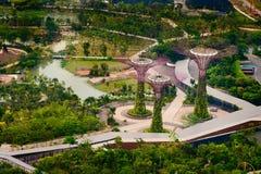 Toppna träd i Singapore, på botaniska trädgårdarna vid fjärden Royaltyfri Fotografi