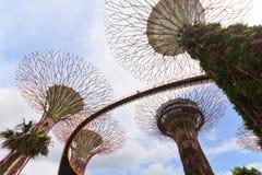 Toppna trees i trädgårdar vid fjärden Singapore Royaltyfri Foto