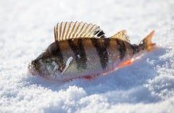 Toppositie op een aas met ijs in de winter wordt gevangen die royalty-vrije stock fotografie