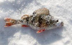 Toppositie op een aas met ijs in de winter wordt gevangen die royalty-vrije stock foto's