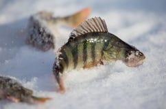 Toppositie op een aas met ijs in de winter wordt gevangen die royalty-vrije stock afbeelding