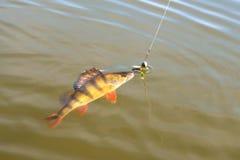 Toppositie, vissen met aasvortu op een haak op een vislijnzonneschijn stock foto