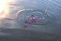 Toppositie, vissen op een haak met een aas in de mond, vislijn, zonnige heldere glans op het water stock foto