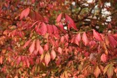 Tops calientes del árbol de Autumn Foliage Fotografía de archivo