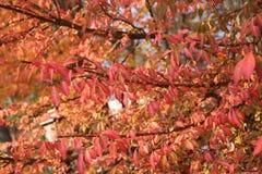 Tops calientes del árbol de Autumn Foliage Fotografía de archivo libre de regalías