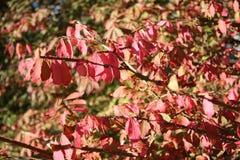Tops calientes del árbol de Autumn Foliage Imagen de archivo libre de regalías