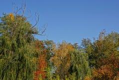 Tops coloreados brillantes de árboles de hojas caducas contra el cielo Imagen de archivo