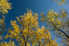 Tops and crowns of autumn trees. And blue sky - background stock photos
