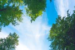 Tops de árboles contra el cielo Fotos de archivo libres de regalías